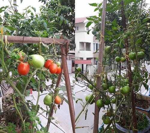 Bà ngoại tuổi 50 dỡ mái tôn sân thượng, xây luống trồng rau