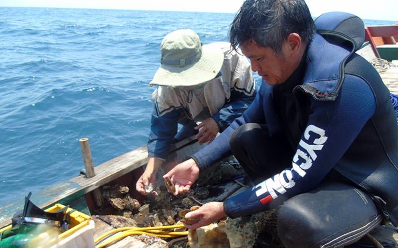 Thuê thợ lặn khảo sát cá chết xếp tầng ở Quảng Bình