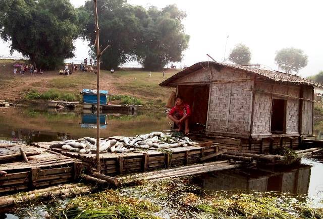 Hơn chục tấn cá chết như ngả rạ trên sông Bưởi