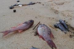 'Nhà căm học' và chuyện con cá bị vặt… trụi lông
