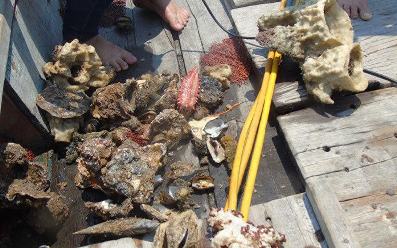 Không phát hiện 'xác cá xếp lớp' dưới đáy biển Quảng Bình