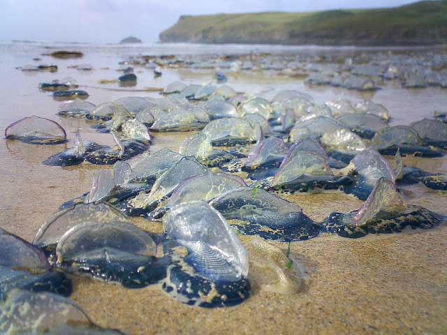 Chim, cá chết hàng loạt ở nhiều nơi trên thế giới