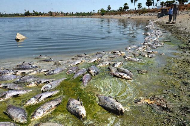 Cá chết, hải sản, cúm gia cầm, cá chết hàng loạt