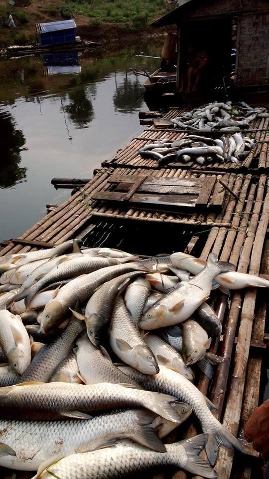 Cá chết sông Bưởi: Kiến nghị dừng nhà máy mía đường