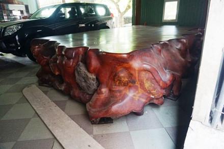 Choáng trước bộ ngựa 'siêu khủng' tiền tỷ của đại gia Hà Tĩnh