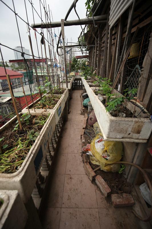 'siêu phẩm' VAC, vườn - ao - chuồng, tầng thượng, trồng rau, Hà Nội