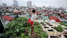 Hà Nội: 'Siêu phẩm' vườn-ao-chuồng giữa lưng chừng trời