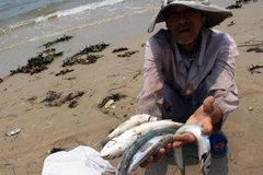 Cá chết, hạn mặn: Việt Nam khó chồng lên khó