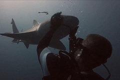 Thợ lặn gây sốc với màn ôm đầu cá mập bằng tay không