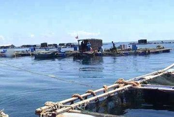 Sự thật vụ cá chết hàng loạt ở đảo Phú Quý