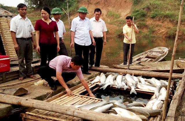 Đền bù 1,4 tỷ đồng vụ cá chết hàng loạt trên sông Bưởi