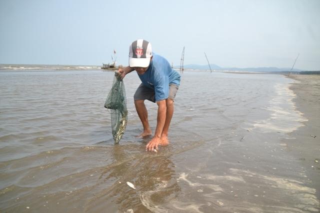 Cá chết dạt từ tàu chìm vào bờ biển Nghệ An?
