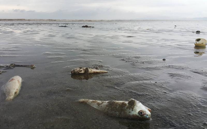 Kiểm tra nguyên nhân cá chết bất thường ở Nghệ An