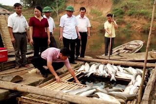 Nhà máy xả thải chết cá: Phạt gần nửa tỷ, đình chỉ 6 tháng