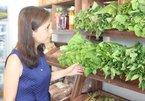 Bỏ việc ngàn đô ở Singapore, về quê trồng rau sạch