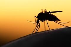 Chỉ cần bổ sung loại vitamin này, muỗi sẽ tránh xa bạn cả mùa hè