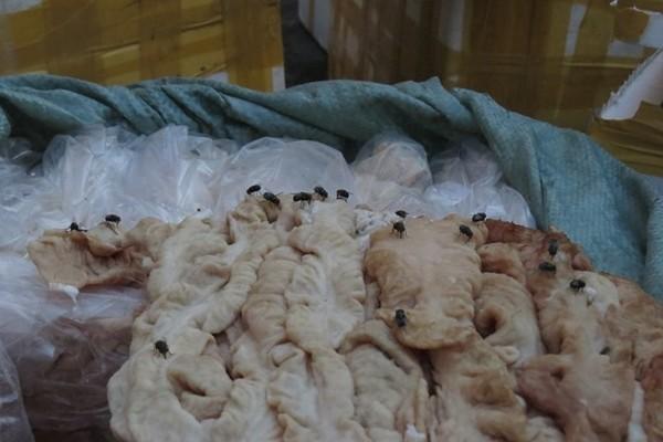Bắt hàng chục tấn thịt, nội tạng thối ruồi bu kín