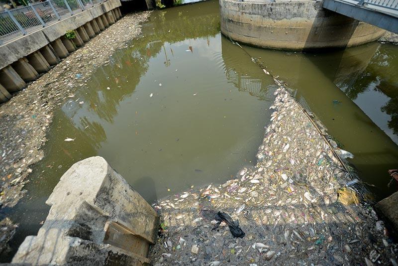 cá chết, nhiêu lộc thị nghè, ô nhiễm, rác thải