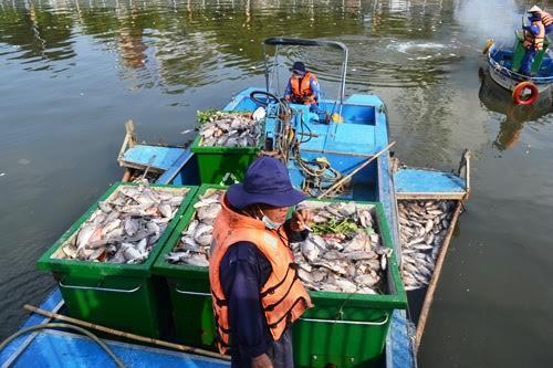 cá chết trên kênh nhiêu lộc
