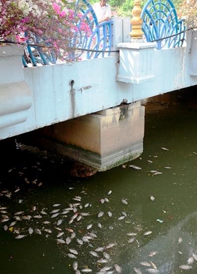 Vớt gần 70 tấn xác cá nổi trắng kênh Nhiêu Lộc