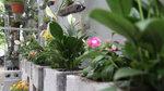 Chàng sinh viên biến bãi rác thành vườn hoa đẹp lung linh