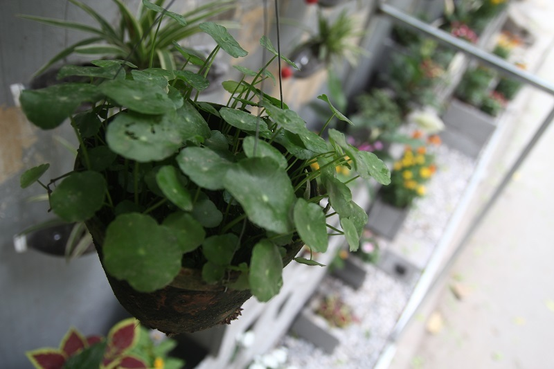 sinh viên báo chí, vườn hoa đẹp, Học viện Báo chí Tuyên truyền