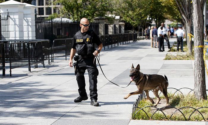 Tiết lộ về đội chó bảo vệ Tổng thống Mỹ công du