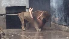 Khoả thân lao vào chuồng sư tử tự sát