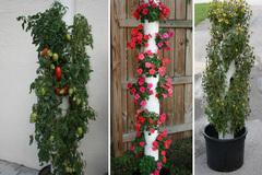 15 mẫu thiết kế trồng cây trong ống nhựa PVC vừa đẹp vừa tiết kiệm không gian