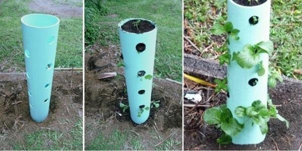 thiết kế trồng cây, ống nhựa, tiết kiệm không gian, trồng cây, ban công, dây leo