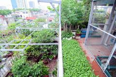 Khu vườn 100 m2 xanh mướt trên tầng cao giữa Ba Đình - Hà Nội