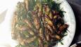 Nhậu ve sầu: Đặc sản mùa hè 500 ngàn/kg
