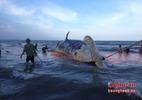 Hàng ngàn người đưa cá voi khủng đi chôn