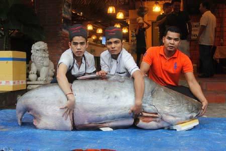 Đại gia Sài Gòn xẻ thịt 'thủy quái' Campuchia dài 2,2 mét