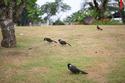 Chào hè ở Vinhomes Riverside: Phóng sinh 2.600 con chim