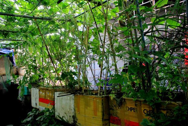 Đi đầu Thủ đô: 17 năm trồng rau, nuôi gà trên tầng thượng