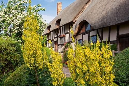 Những khu vườn đẹp như mơ của cha đẻ 'Romeo và Juliet'