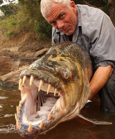 Dân chơi kinh dị Hà Nội: Nuôi thủy quái ăn thịt Congo