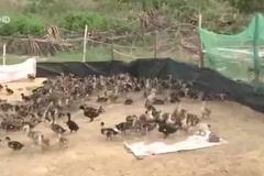 Siêu dự án tỷ đô bỏ hoang: Dân lấn đất trồng dưa, nuôi vịt