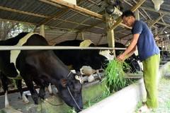 Bí thư Thăng chỉ đạo: Dân vẫn chưa bán được sữa