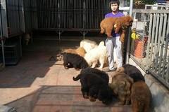 Thạc sĩ đất mỏ ở Sài Gòn sở hữu trại chó 20 tỷ
