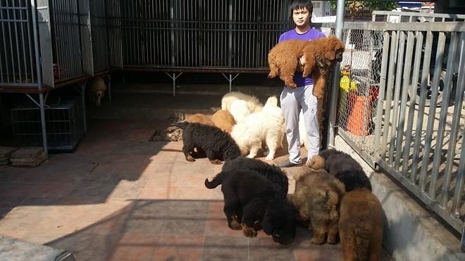 Thạc sĩ, đất mỏ, Sài Gòn, trại chó, tiền tỷ , ngao Tây Tạng, Kiều Văn Hoàng, chó ngao, nuôi chó