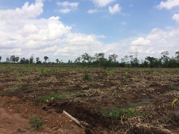 Đề nghị khởi tố DN đào giao thông hào chống…voi rừng