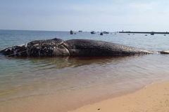 Độc đáo bộ xương cá voi dài 17m ở đảo Phú Quý