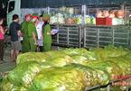 Nghệ An: Rau cải Trung Quốc nhiễm độc thuốc sâu gấp 8 lần