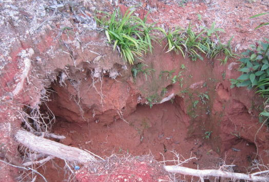 3 phu đào vàng mắc kẹt trong hang