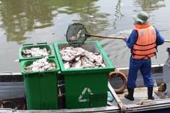 TP.HCM quyết dẹp nạn tận diệt cá trên kênh Nhiêu Lộc