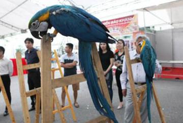 Đại gia Việt vung nghìn đô chơi vẹt Nam Mỹ