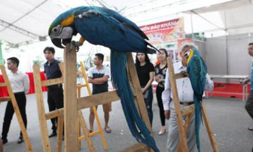 Đại gia Việt, nghìn đô, thú chơi, vẹt Nam Mỹ, dân chơi, Hà Nội, Sài Gòn, chơi chim