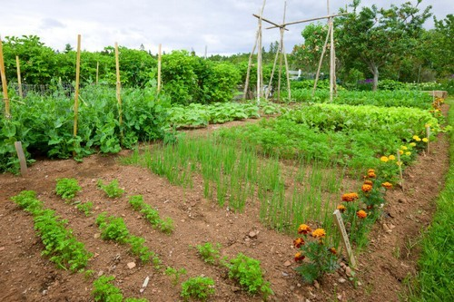 Những ý tưởng thiết kế vườn rau cho các không gian từ nhỏ đến lớn